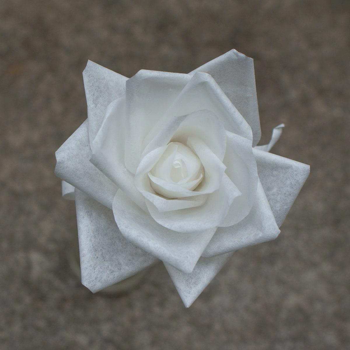 plain paper tea rose