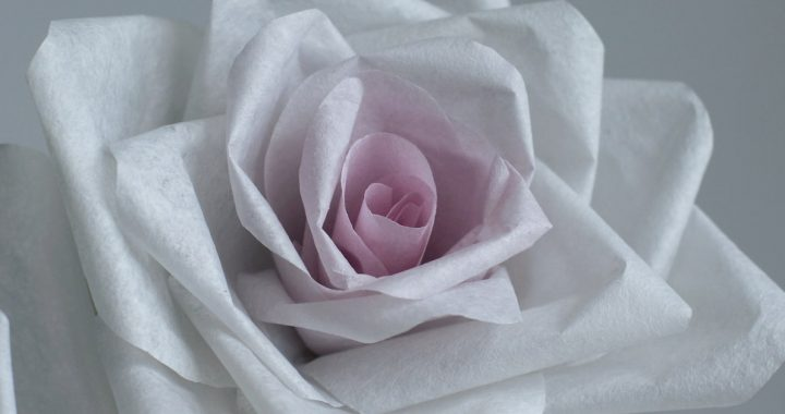 pink centre paper rose