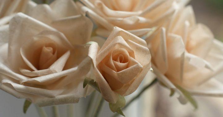 peach paper roses