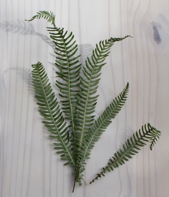 dried woodland fern