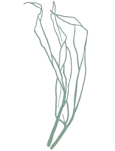 green bamboo sketch