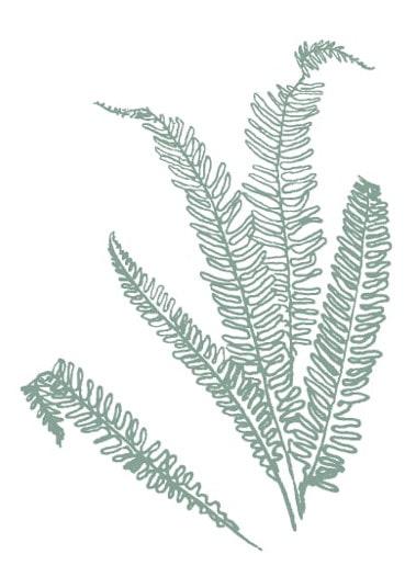 green fern sketch