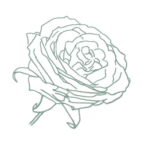 green florist rose sketch