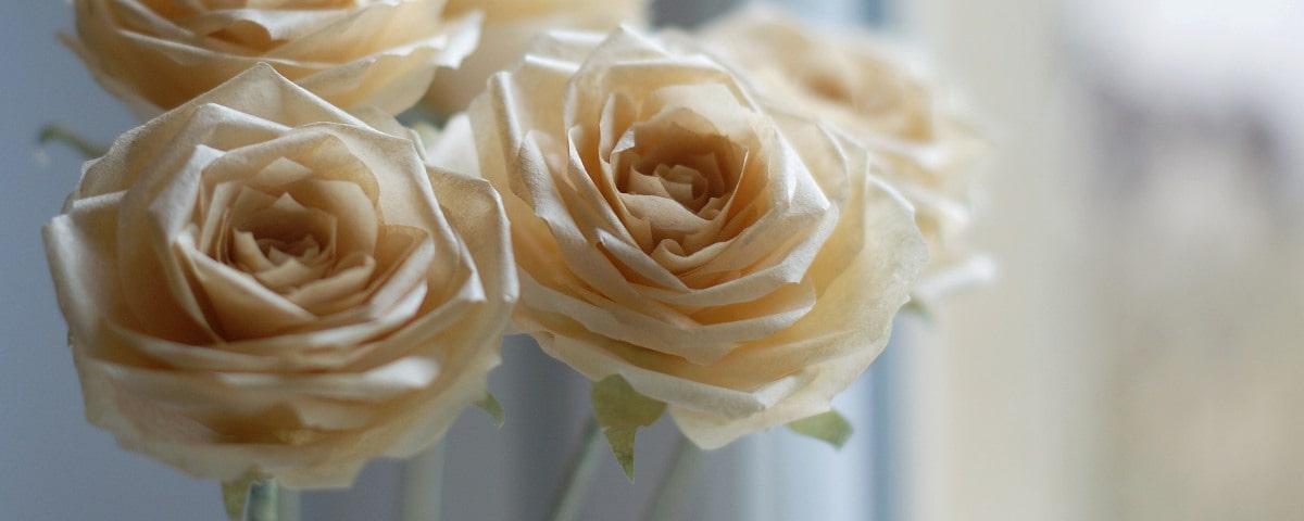 orange paper roses