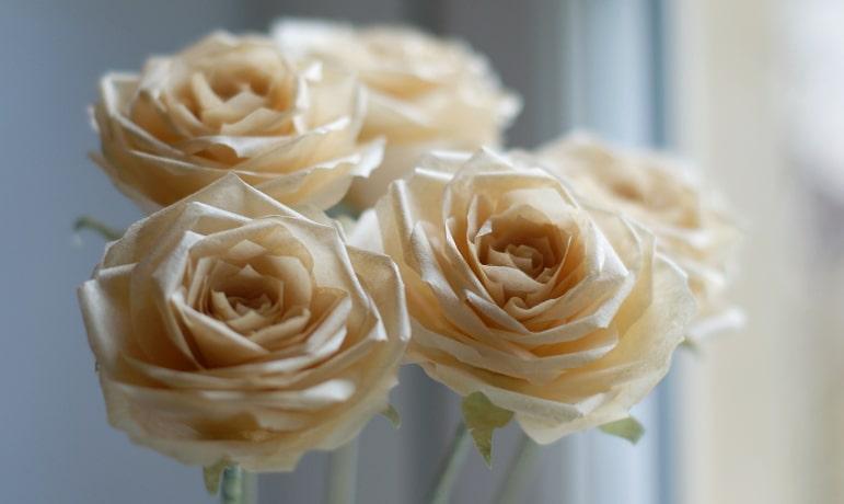 pale orange paper roses