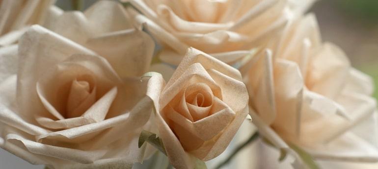 peach hybrid tea paper roses