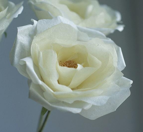 yellow garden paper rose