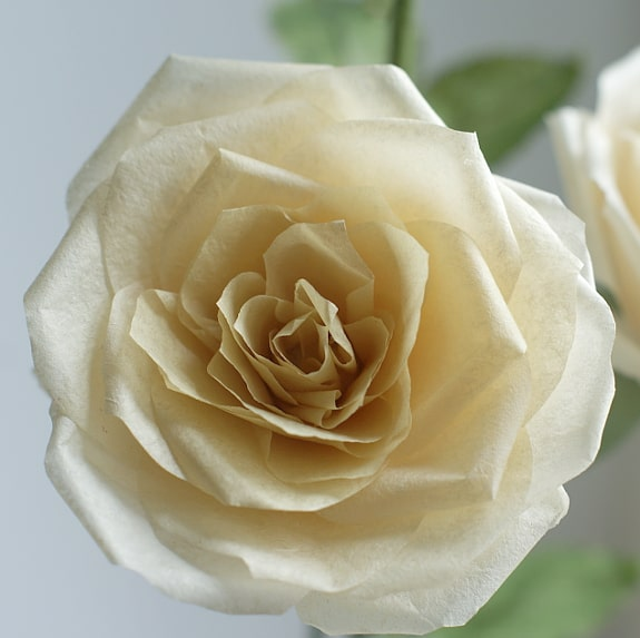 yellow paper rose