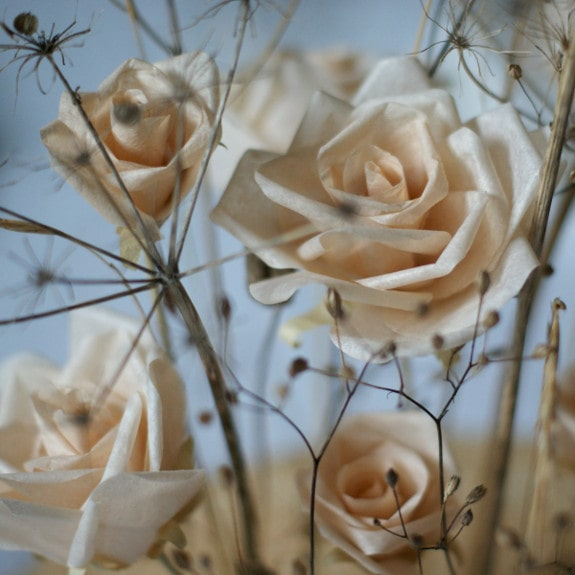 autumn roses and seed heads